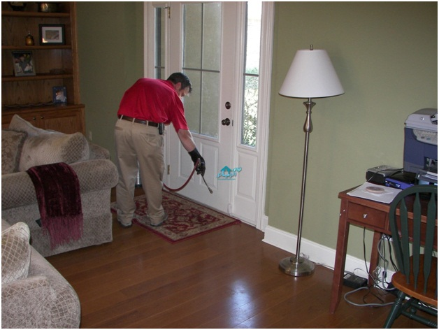 Time To Say Goodbye To Pests Through Professional Pest Control Services