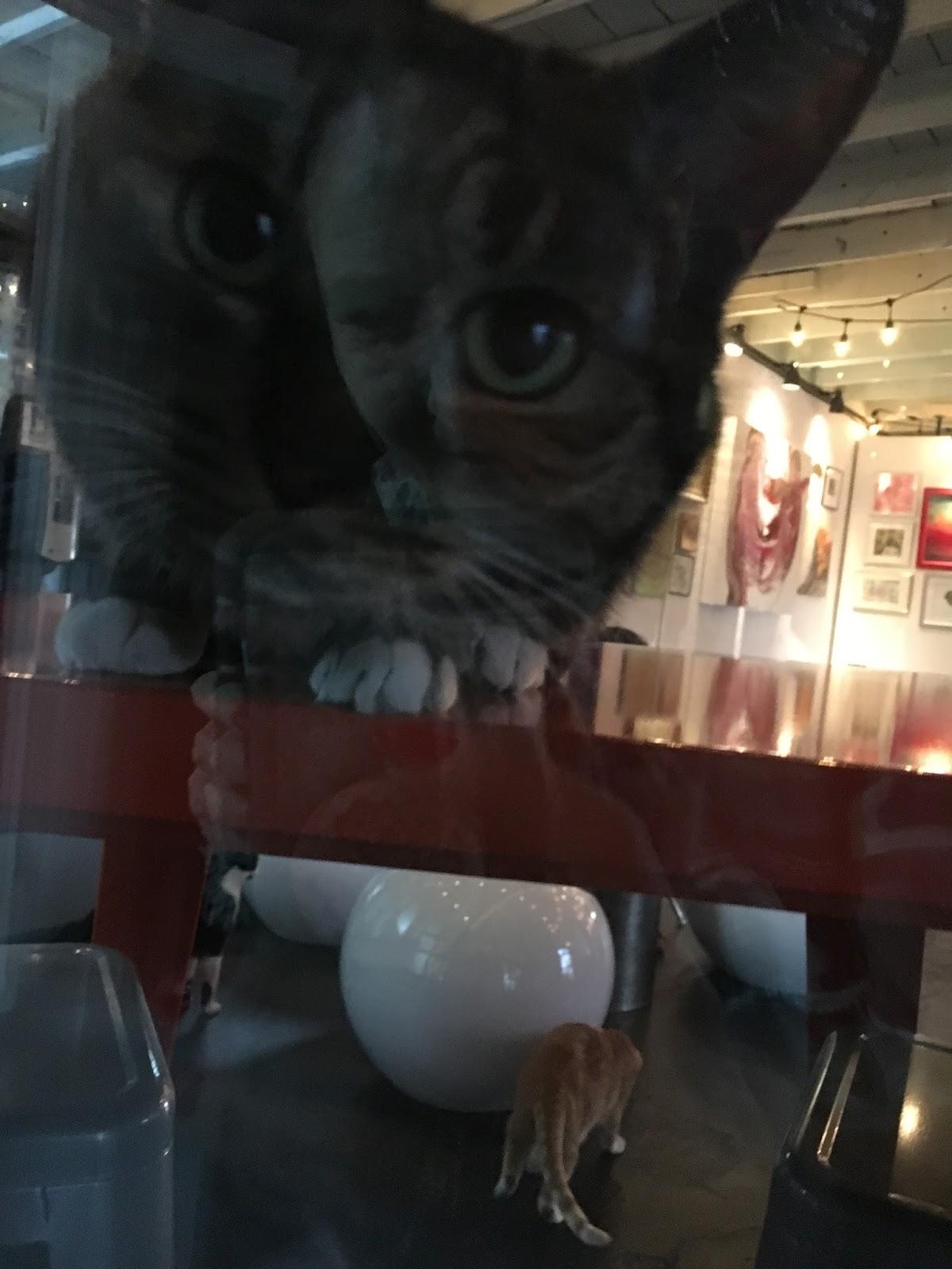 Mac Tabby Cat Cafe Charlotte Nc