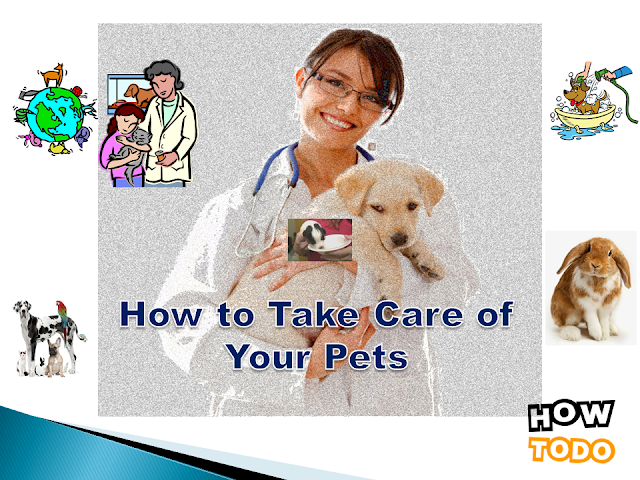 how to take care of a puppy,how to take care of animals,how to take care of your pet,how to take care of a pet,how to take care of a betta fish,how to take care of a dog,how to take care of a cat,how to take care of a kitten,how to,how to take care,care,take care of pets,how to care for a pet,pet care,how to take care of crayfish