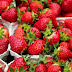 Cara Budidaya Buah Strawberry