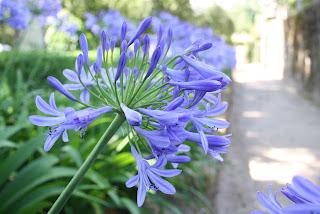 Flor en Pazo de Oca (A Coruña, España)