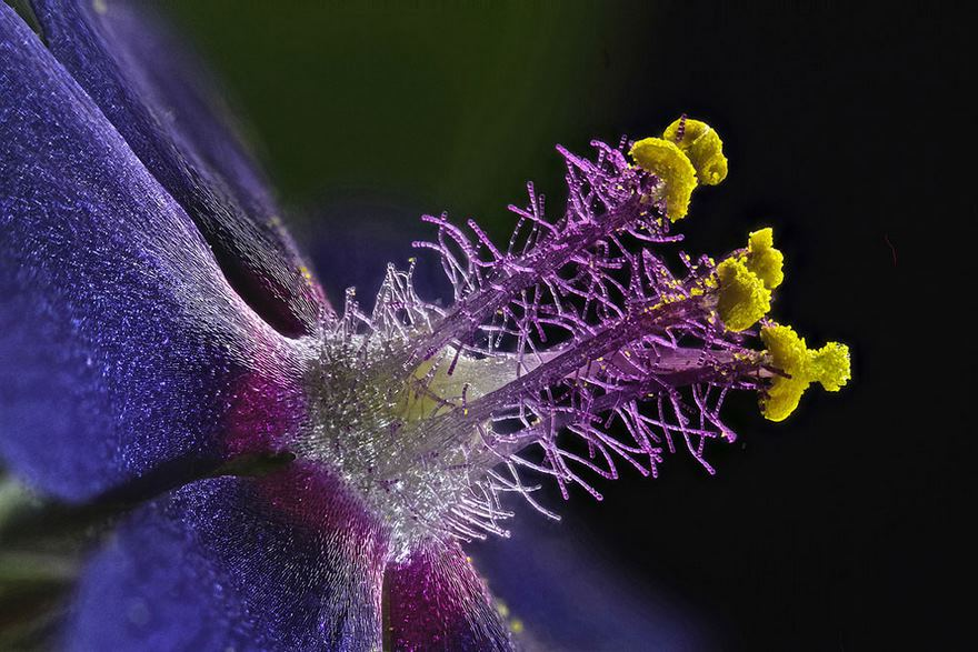 2016 Nikon Macro Photo Contest Winners Show The World Like You've Never Seen Before - Eighth Place. Wildflower Stamens