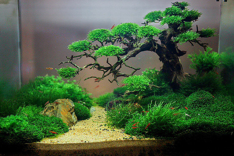 5 Tanaman Yang Bisa Hidup Di Air Untuk Aquarium