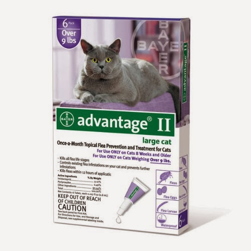 Best Flea Control for Cats