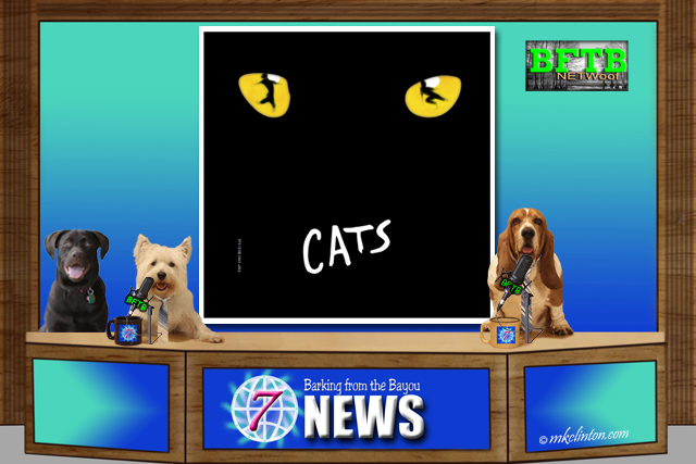 BFTB NETWoof News desk with dog anchors and Cats the musical on back screen