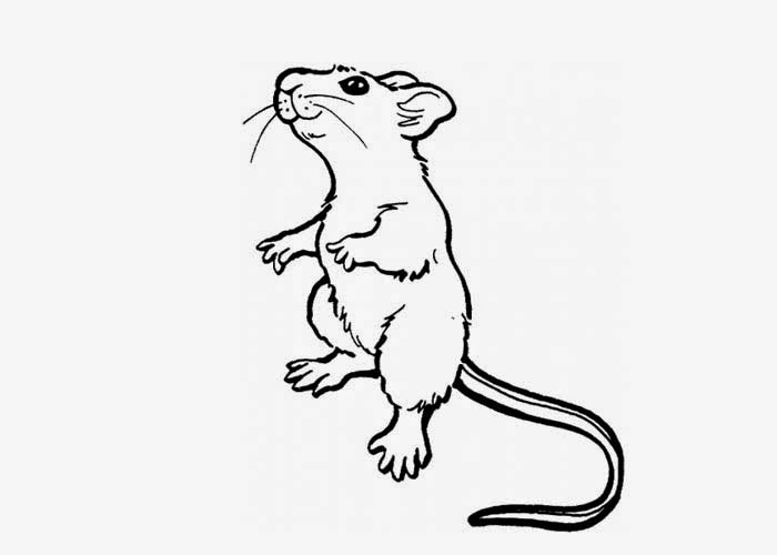Rat coloring page | Free Coloring Pages and Coloring Books ...