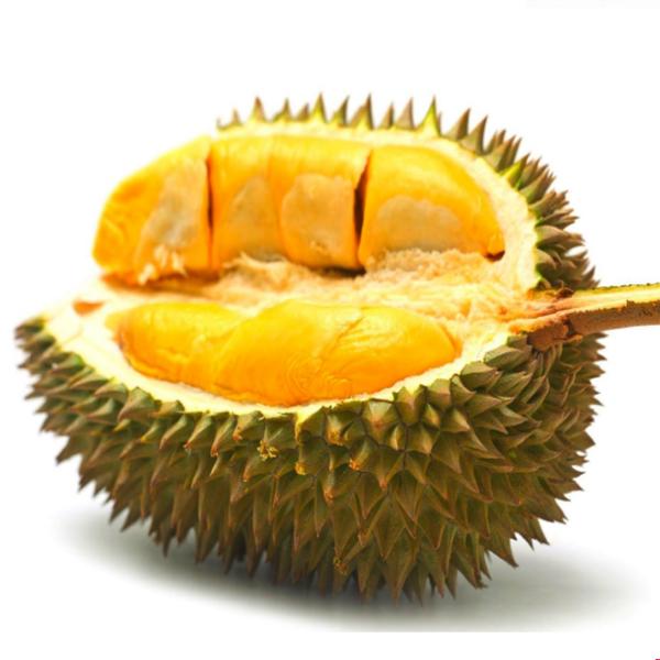 Durian Matahari, Khasiat Durian Matahari, Manfaat Durian Matahari, Download Poster Durian Matahari,