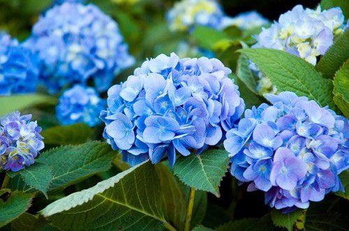 hình ảnh hoa đẹp nhất thế giới 17