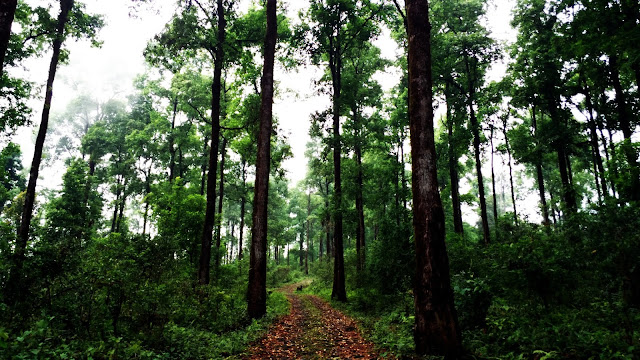 The Jungle tour Packages of North Bengal