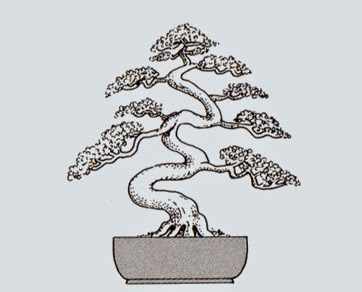 http://evoluzionebonsai.blogspot.it/2015/02/stili-bonsai-takozukuri-piovra.html