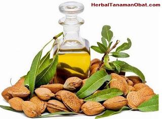 cara menggunakan minyak almond, manfaat minyak almond, manfaat minyak almond bagi kecantikan, manfaat minyak almond untuk kecantikan, manfaat minyak almond untuk wajah, minyak almond sebagai remover makeup, manfaat minyak almond untuk kecantikan kulit wajah