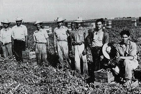 braceros in the farm