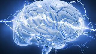 não bộ của con người