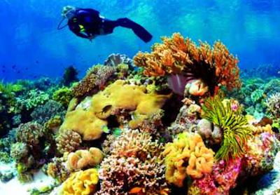 Wakatobi Dive Resort - Spot Menyelam Yang Menakjubkan