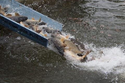 Kedvezhet az édesvízi halgazdálkodásnak az új uniós költségvetési ciklus