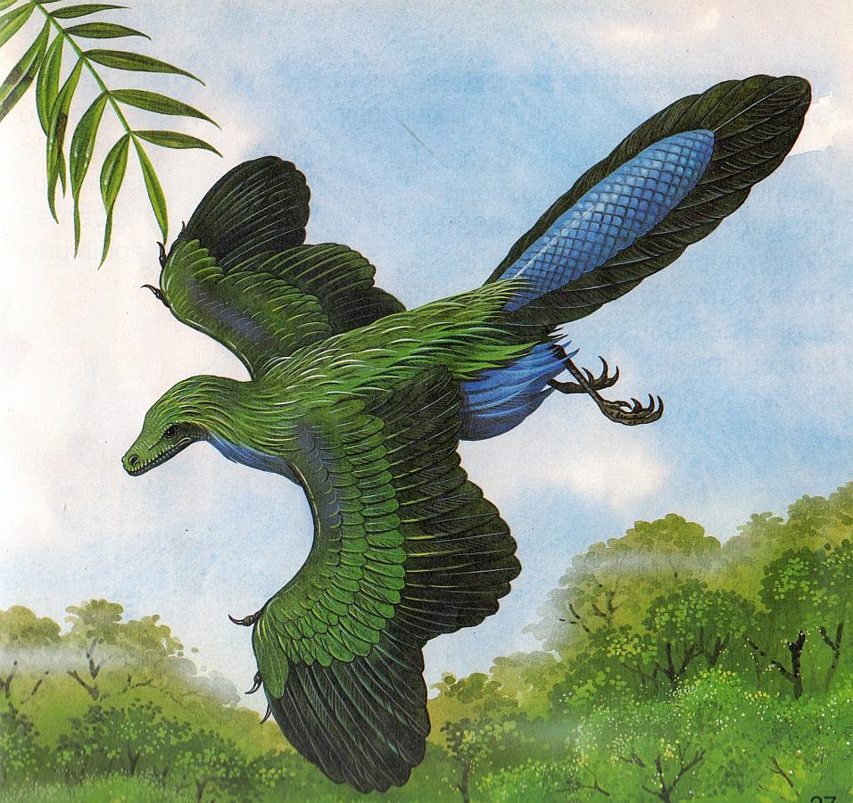 выполнены чистейшего картинка птицы археоптерикс вот определить координаты