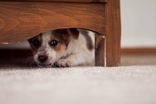 Entrenando a un perro temeroso, juegos de entrenamiento para perros tímidos