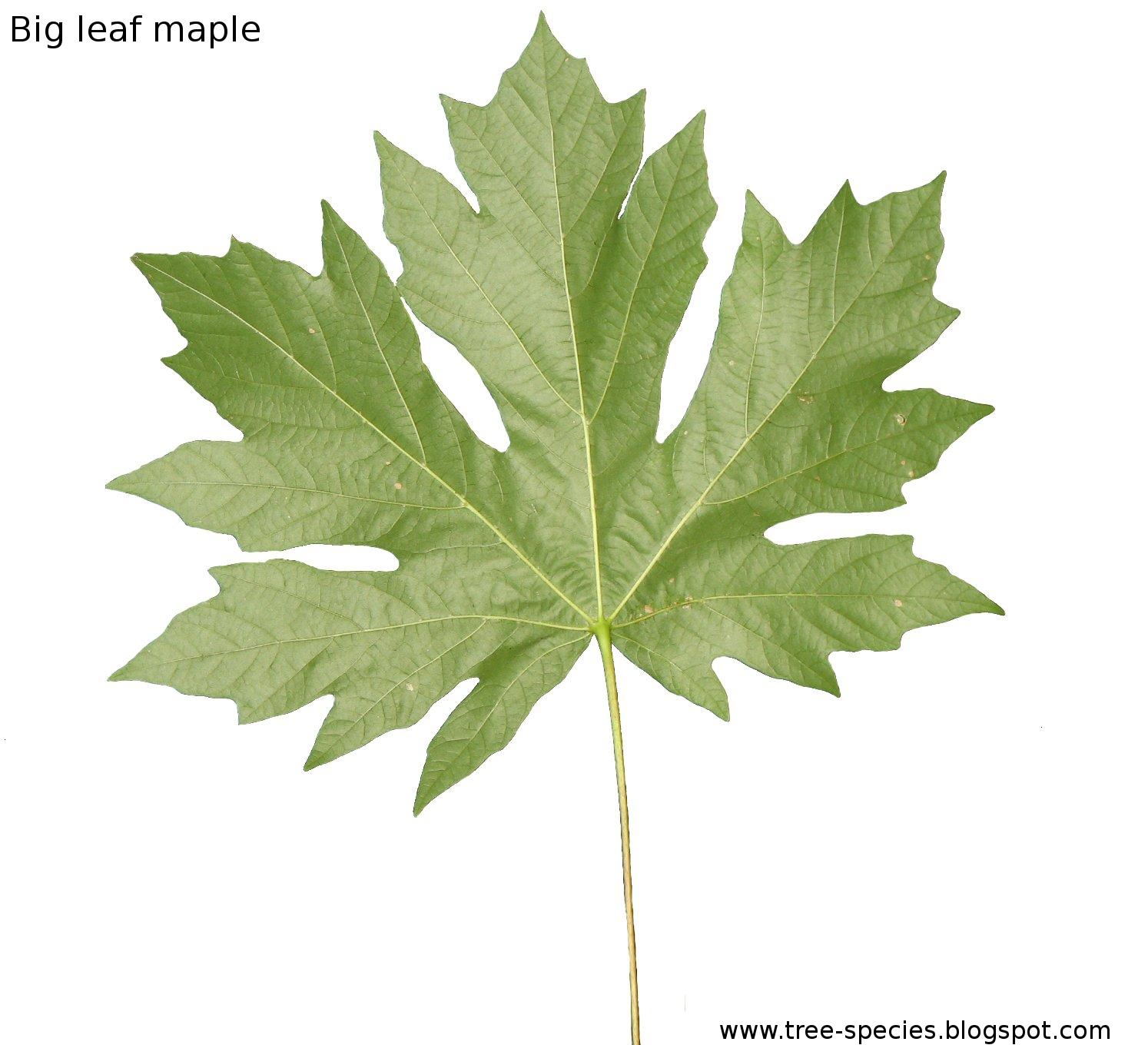 The World 180 S Tree Species 2012 05