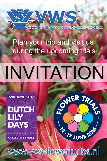 Visit the Dutch Lily Days and FlowerTrials at VWS Flowerbulbs