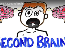Science: You Have A Second Brain