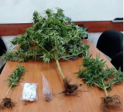 Σύλληψη για καλλιέργεια ναρκωτικών στο Ξηρόμερο (φωτο) | Νέα από ...