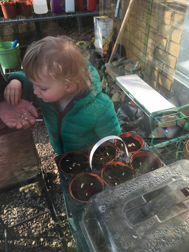 Planting, Postman Pat and a Picnic.  toddler planting seeds into flower pots