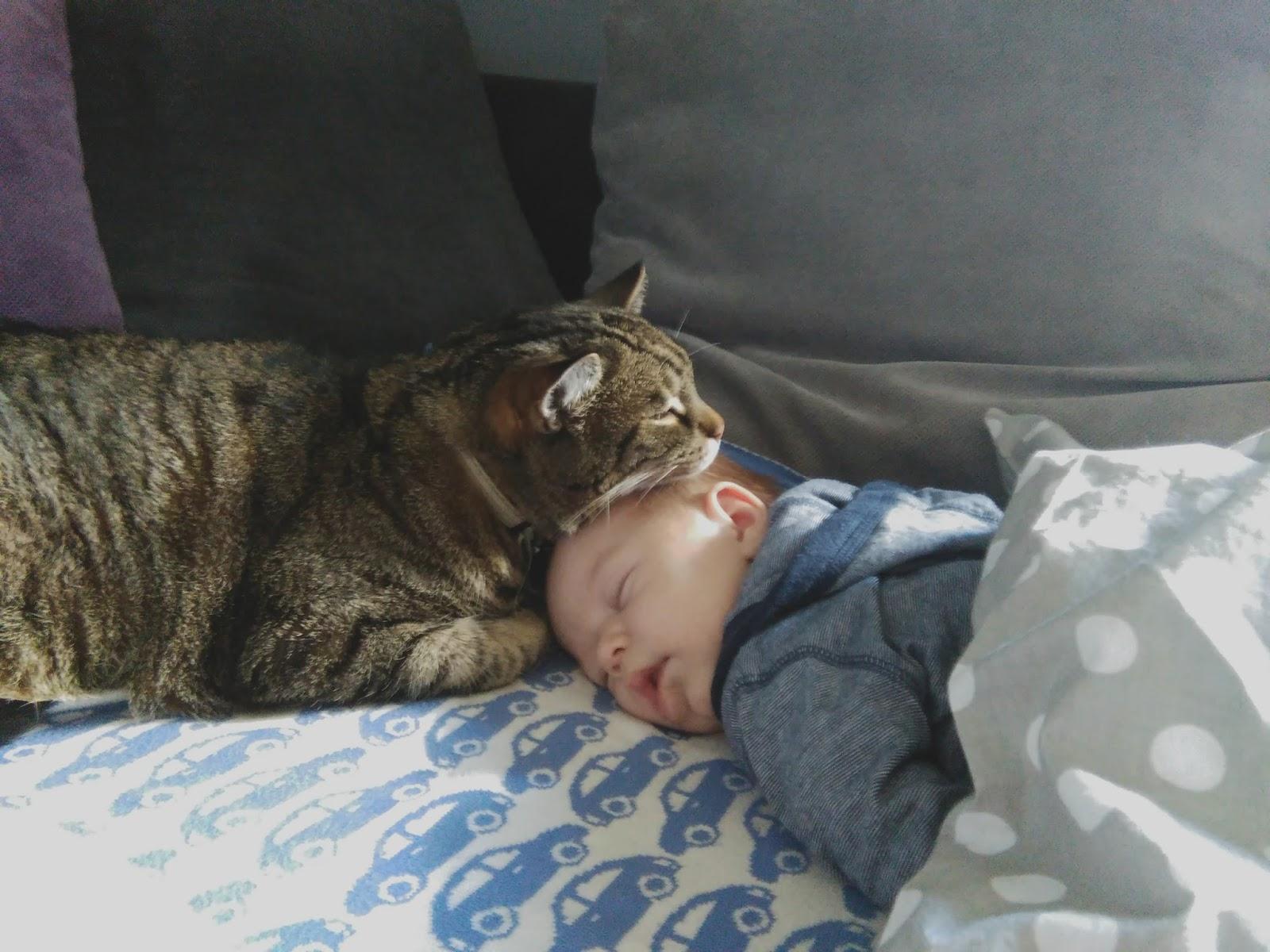 Dziecko i zwierzę pod jednym dachem
