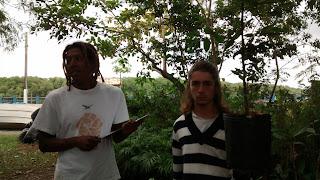 Mudas da Mata Atlântica gratis no banco de mudas de Itanhaém