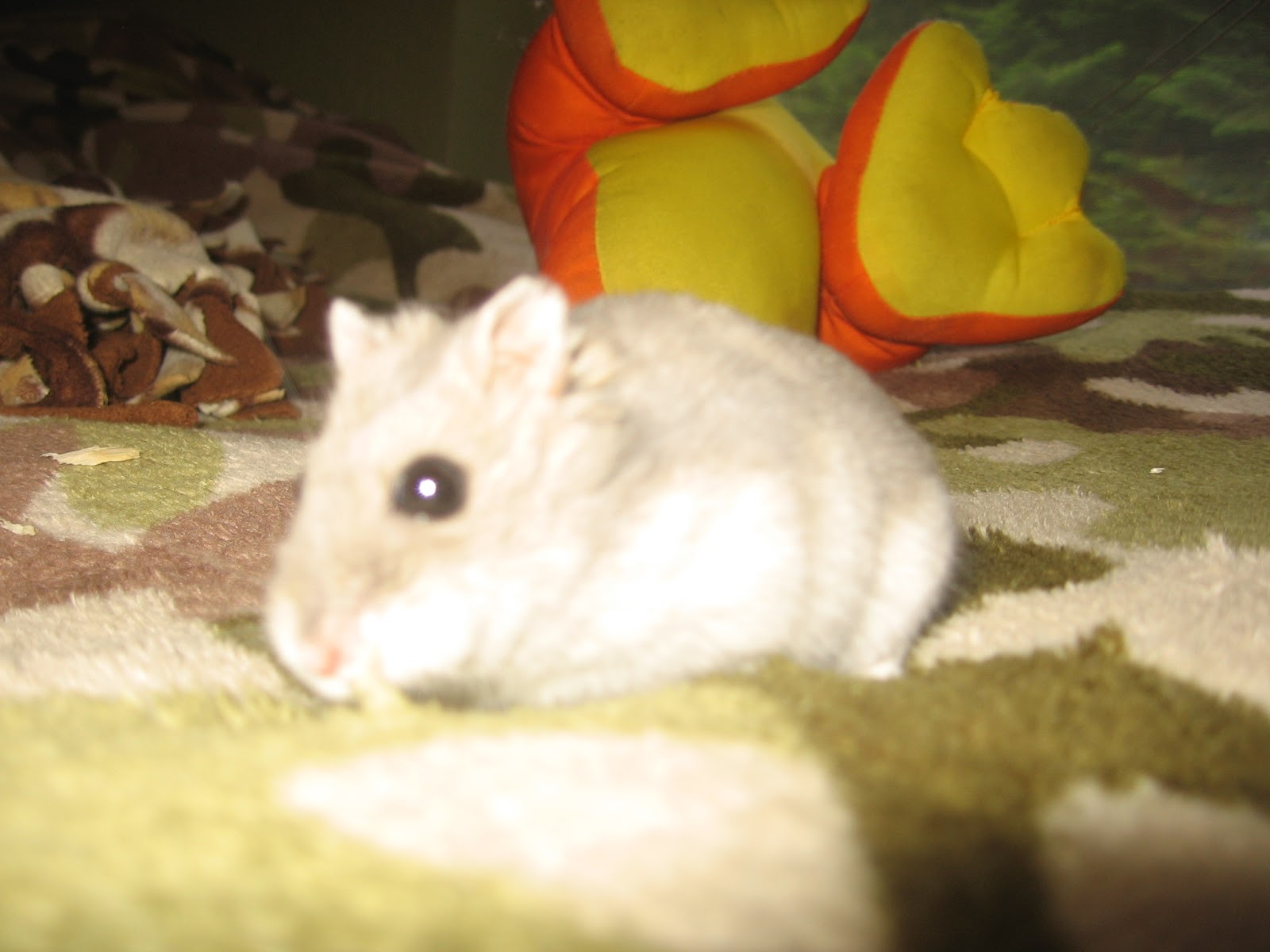 Paigey975 I highly recommend a gerbil instead of a hamster since these are much more friendly than hamsters My children who are now adults have always had pets