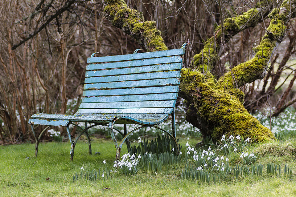 winter garden photography - the turquoise weathered bench