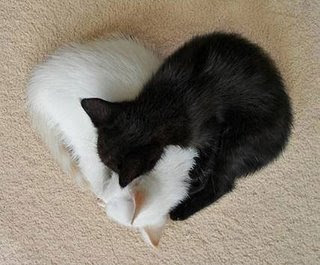 สาเหตุที่แมวชอบให้ลูบหัวเกาคาง
