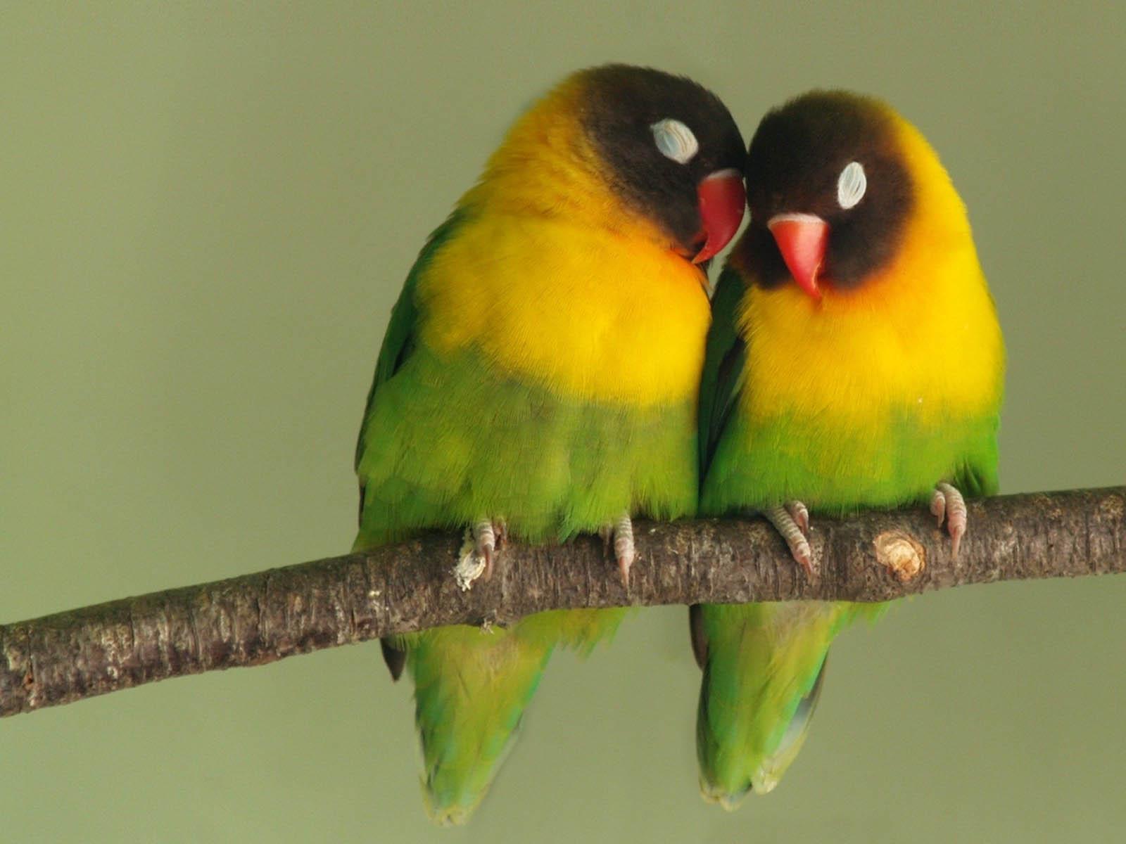 the lovebirds - photo #24