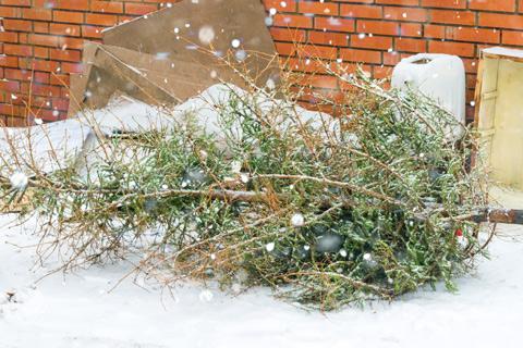 Christmas tree disposal Alpharetta Ga