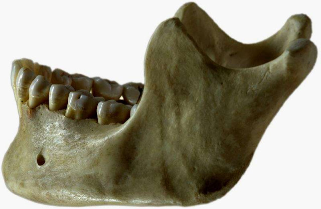 What teeth reveal about the lives of modern humans