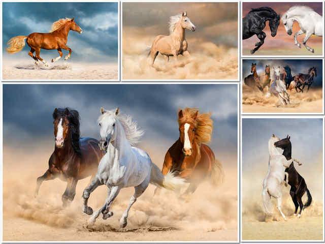 6 صور للخيول بجودة عالية جدا