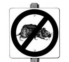Lassa fever has reportedly killed a medical doctor, and three others in Anambra State.