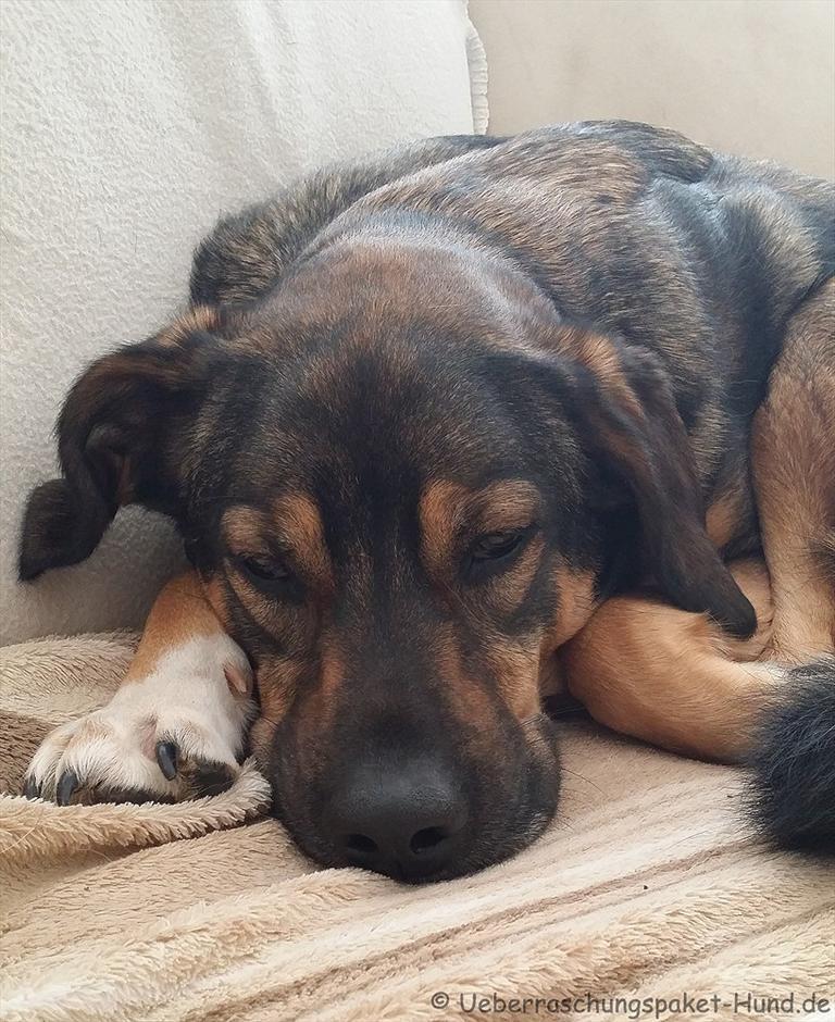 berraschungspaket hund ein hundeblog der zeigt wie unterschiedlich hunde doch sind wenn. Black Bedroom Furniture Sets. Home Design Ideas
