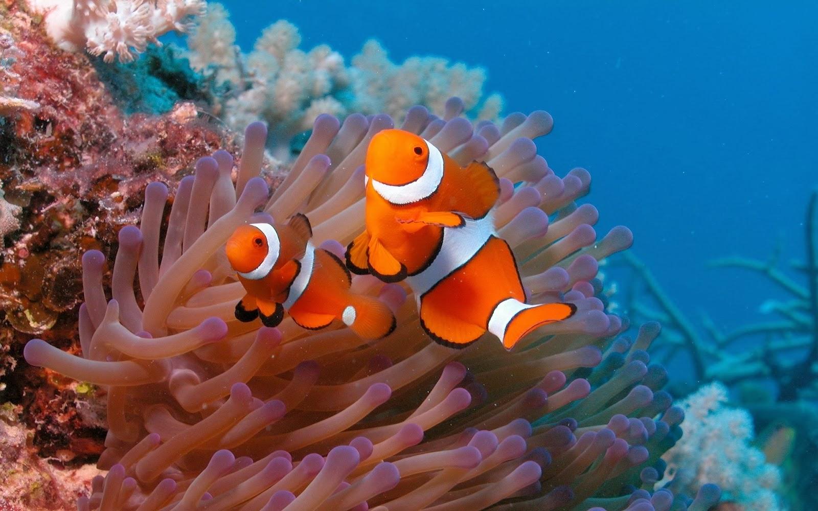 Finding Nemo D Animasi Hd Wallpaper: 20 Wallpaper Bawah Laut Terbaru