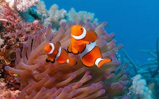 wallpaper bawah laut