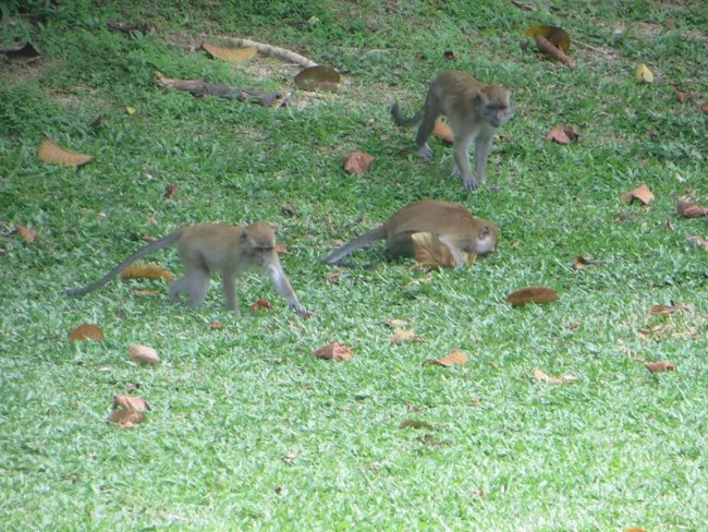 Три обезьяны в саду