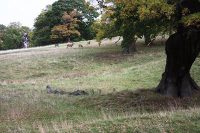 Photo of deer grazing