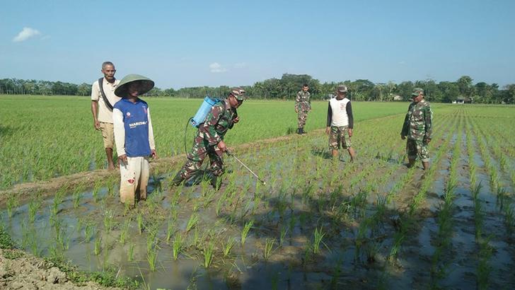 Terbukti Ampuh, Penyemprotan Nutrisi Wijayakusuma Kini Merambah Desa Doplang