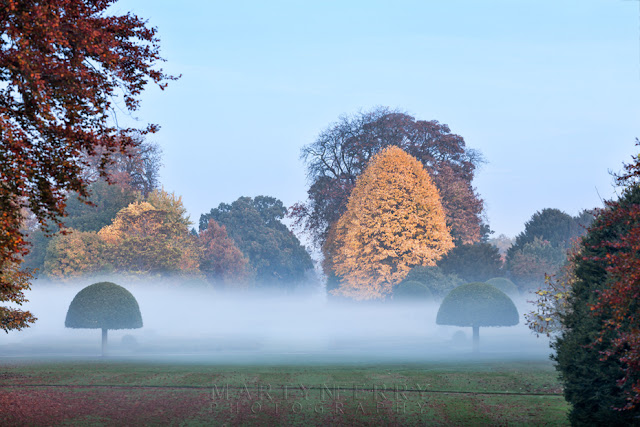 Autumn colour on the trees at the Wimpole Estate on a misty evening