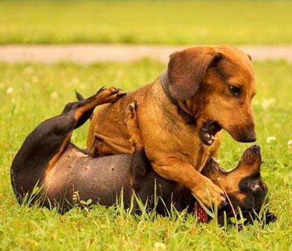 Gambar hewan hewan lucu | dulayex blog