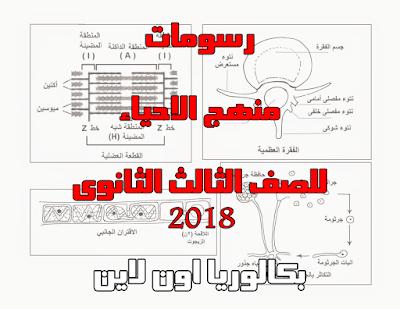 رسومات منهج الاحياء للصف الثالث الثانوى 2018