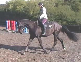 Horse Jack