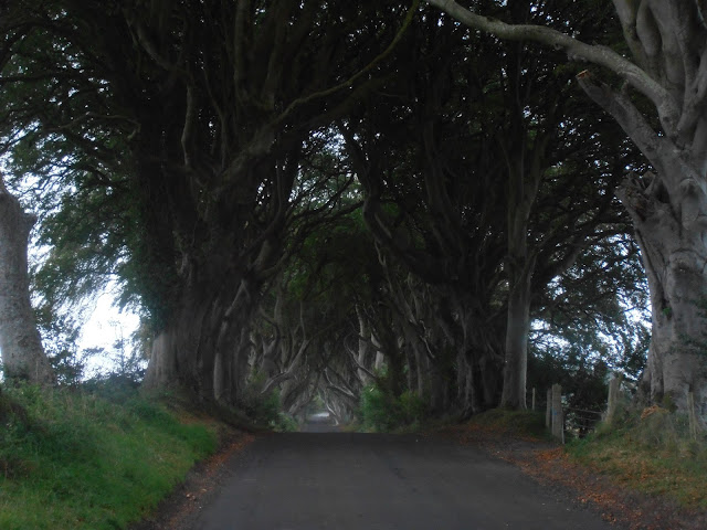 Los frondosos árboles del Camino del Rey