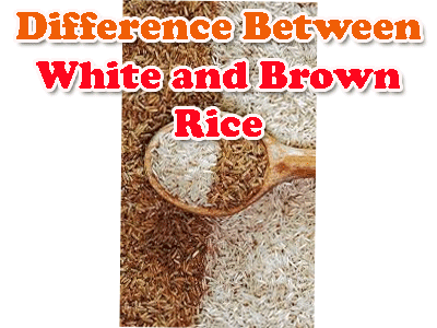 white and brown rice difference