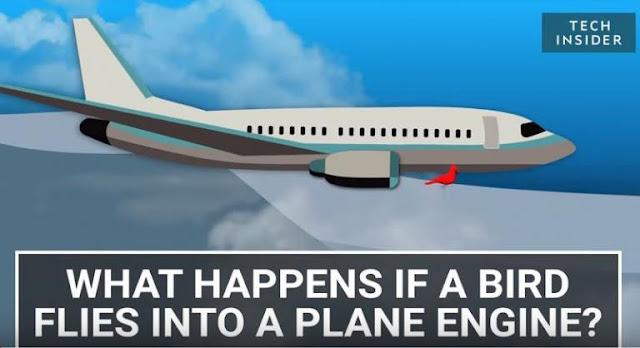 Τι πραγματικά συμβαίνει όταν ένα πουλί συγκρουστεί με κινητήρα αεροπλάνου