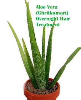 Aloe Vera (Ghritkumari) Overnight Hair Treatment